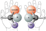 Chiral hands and molecules.